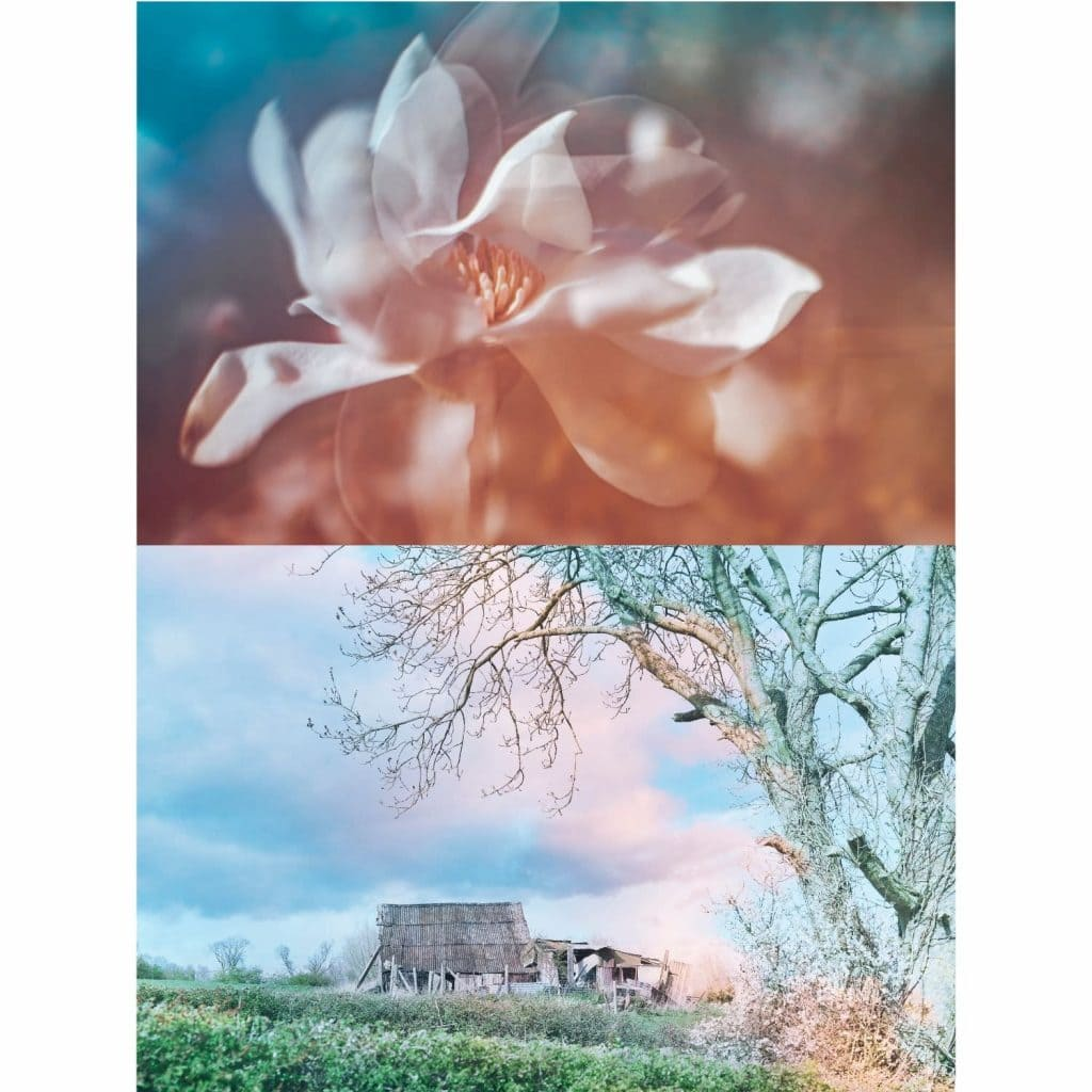 Collaborative art by creating a photography diptych using double exposures as our monthly theme.